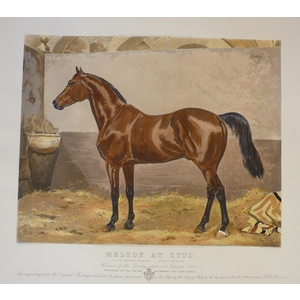 Melton At Stud. Handcoloured copper engraving by F Sindici. Reissued from the original plate.