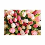 Pink Pepper Flower Gift Cards with Envelope